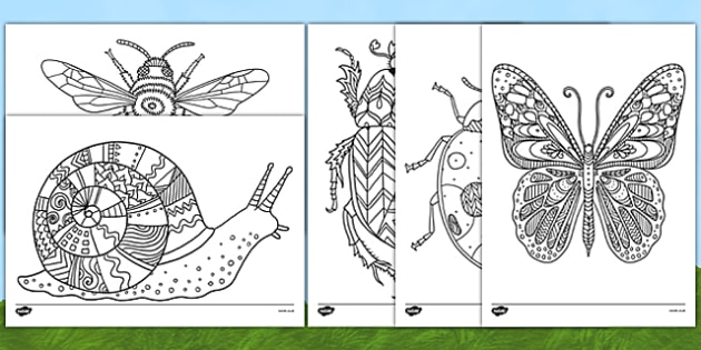 Minibeast Themed Mindfulness Colouring Sheets - minibeast, mindfulness, colouring, sheet, colour, stress relief, calm, de-stress