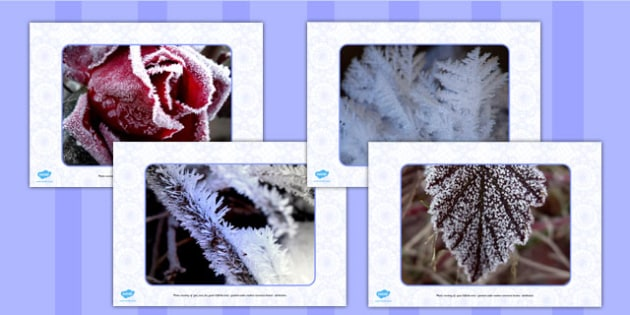 Frost Display Photos - displays, display, photo, frosty, visual