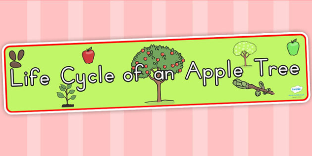 Apple Tree Life Cycle Display Banner - lifecycles, life cycles