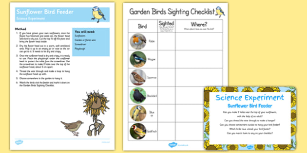 Sunflower Bird Feeder Science Experiment and Prompt Card Pack - seed, food, growing, animals, birds, eyfs, early years, kw, kuw