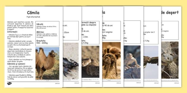 Animale Din Desert Planse Informative Sarpe Scorpion Camila