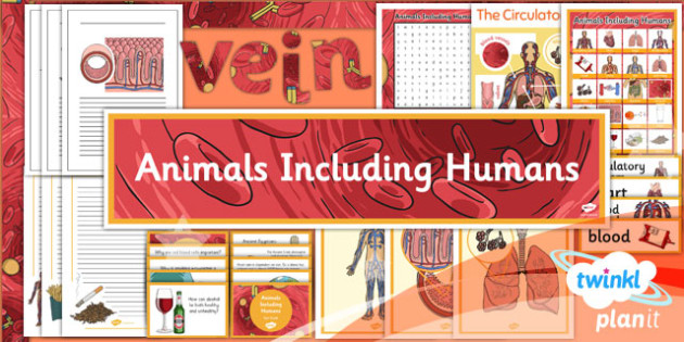 science animals including humans year 6 unit additional