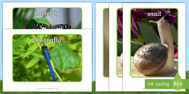 Minibeast Display Photos - Minibeast photos, minibeast photographs, minibeast investigation, minibeast display, Minibeasts, Topic, Foundation stage, knowledge and understanding of the world, investigation, living things, snail, bee, ladybird, butterf