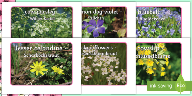 Spring Flowers Display Photos English German Eal German Spring