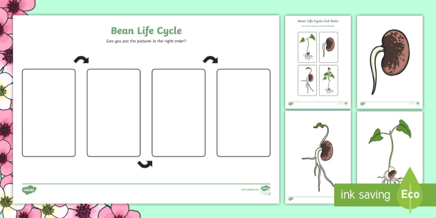 Bean Life Cycle Worksheet Activity Sheet Bean Plants Word
