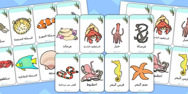 بطاقات تعليمية عن تحت البحر عربي