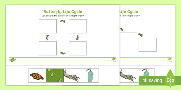 Minibeasts Life Cycle of a Butterfly Worksheets  Twinkl