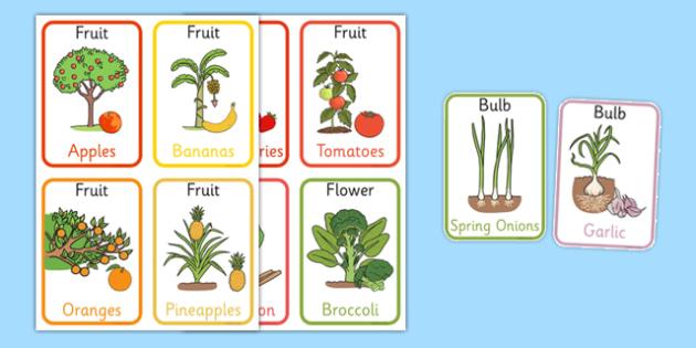 Edible Plant Parts Flash Cards - edible plant, plant parts, flash cards