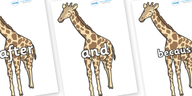 Connectives on Giraffe - Connectives, VCOP, connective resources, connectives display words, connective displays