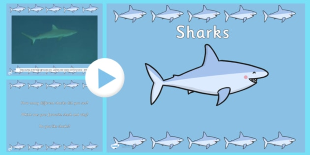 under the sea shark video powerpoint - under the sea, sharks, Modern powerpoint