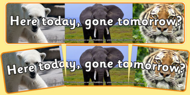Here Today, Gone Tomorrow Display Banner - here today, gone tomorrow, display banner, display, banner, endangered, animals