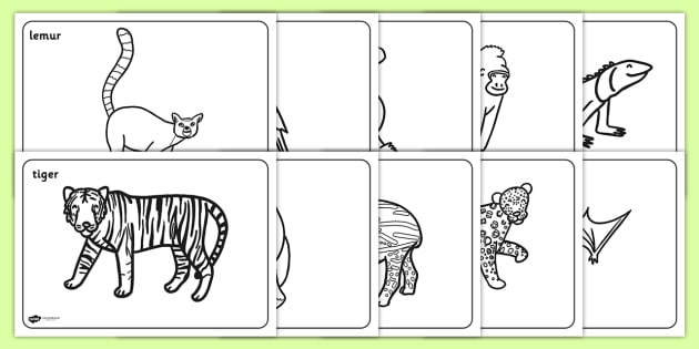 Jungle & Rainforest Colouring Sheets - Jungle, Rainforest
