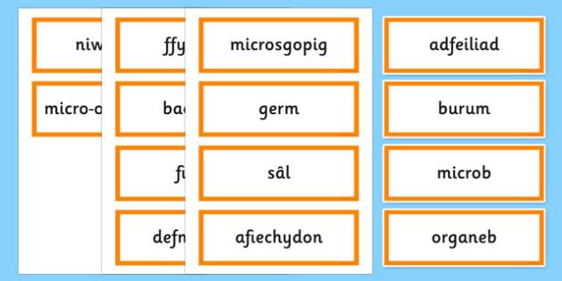 Cardiau fflach micro-organebau - welsh, cymraeg, micro organebau, cardiau fflach