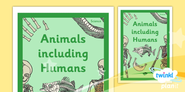 Science: Animals Including Humans Year 3 Unit Book Cover
