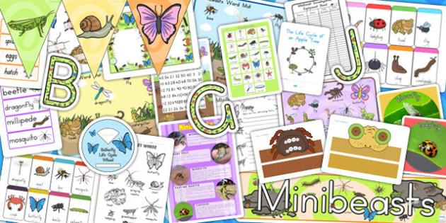 Australia Minibeasts Resource Pack - australia, minibeast, pack