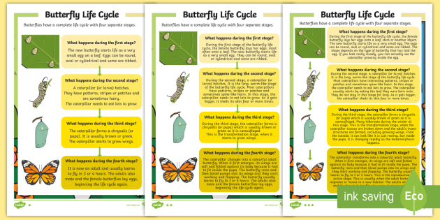 Butterfly life cycle differentiated reading comprehension butterfly life cycle differentiated reading comprehension activity ibookread Read Online