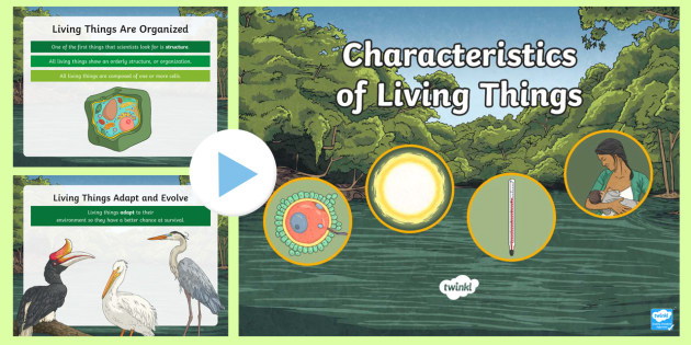 New Characteristics Of Living Things Powerpoint Cl Ification Organization Of Living Things
