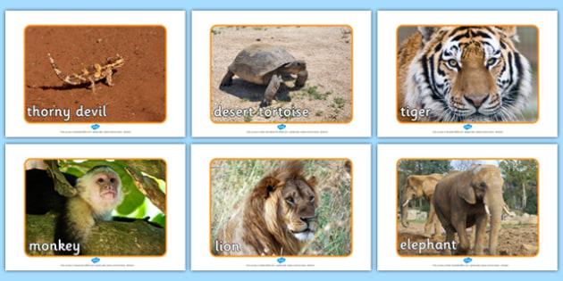 Desert Animals Display Photos - desert, animals, display, photos