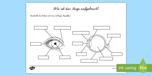 NEW * Das menschliche Auge Arbeitsblatt - Augen, Sehen, Sicht