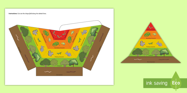 3D Energy Pyramid Visual Aid - energy pyramid, science, food chains