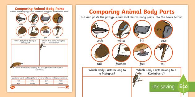 comparing animal body parts worksheet platypus kookaburra animal. Black Bedroom Furniture Sets. Home Design Ideas