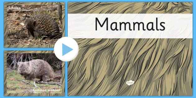 Australian Mammals PowerPoint - australia, mammals, powerpoint, animals