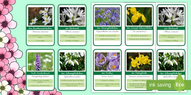 Fruhbluher Informationskarten Blumen Fruhling Bluten Pflanzen