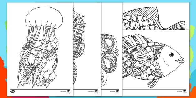 NEW * Lebensraum Meer Ausmalbilder zur Besinnung - Besinnung