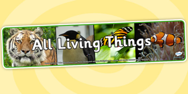 All Living Things Photo Display Banner - living things, photo display banner, display banner, display, banner, photo banner, display header, photo header