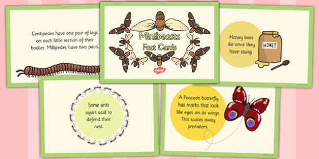 Minibeasts Fact Cards - insects, fact cards, minibeast, facts, cards