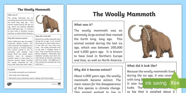 74 [FREE] ANIMAL FACT SHEET TEMPLATE KS1 PDF PRINTABLE ...