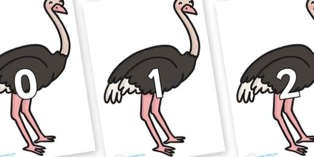 Numbers 0-50 on Ostriches - 0-50, foundation stage numeracy, Number recognition, Number flashcards, counting, number frieze, Display numbers, number posters