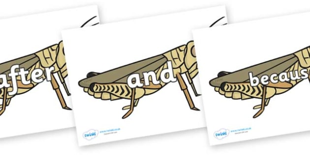 Connectives on Grasshoppers - Connectives, VCOP, connective resources, connectives display words, connective displays