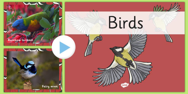 Australian Birds PowerPoint - australia, birds, powerpoint, animals