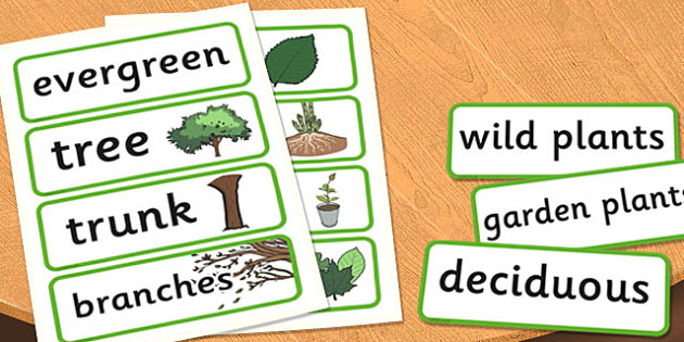 Year 2 Plants Scientific Vocabulary Cards - words, word, science