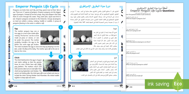 Emperor Penguin Life Cycle Differentiated Reading Comprehension Activity Arabic/English - Emperor penguin, life cycle, penguin chick, penguin egg, KS1 reading, non-fiction, information, fact