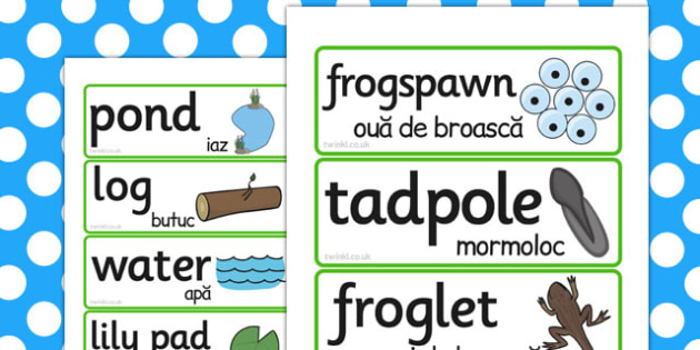Life Cycle Of A Frog Word Cards Romanian Translation - frogs