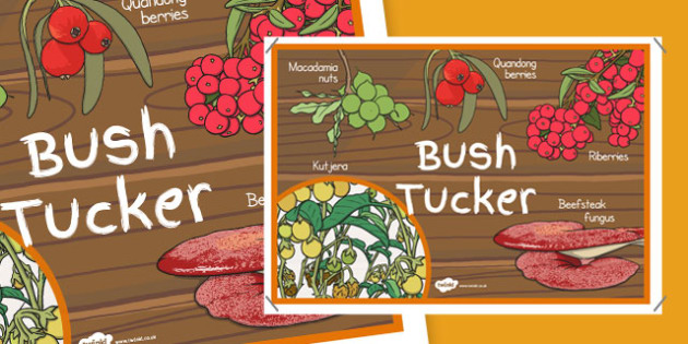 Bush Tucker Display Poster - australia, bush tucker, display poster, display, poster, bush, food