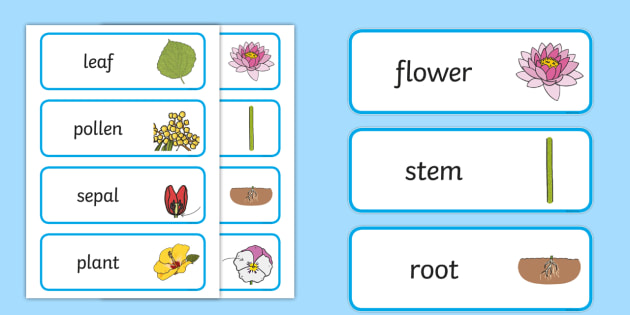 Parts of a plant word cards parts of a plant word cards parts of a plant word cards parts of a plant word cards wordcards ccuart Images