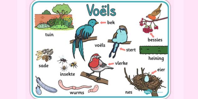 Afrikaans Voëls Woordemat - voëls, woordeskat, woordemat