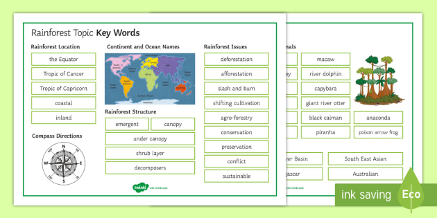 rainforests topic key words mat secondary geography rainforests key words topic