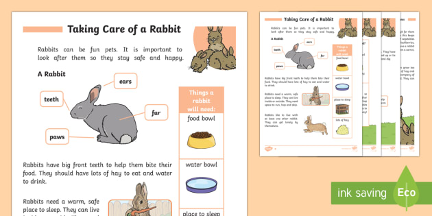 How To Care For Rabbits Pets Pet Eyfs Ks1 Take Care