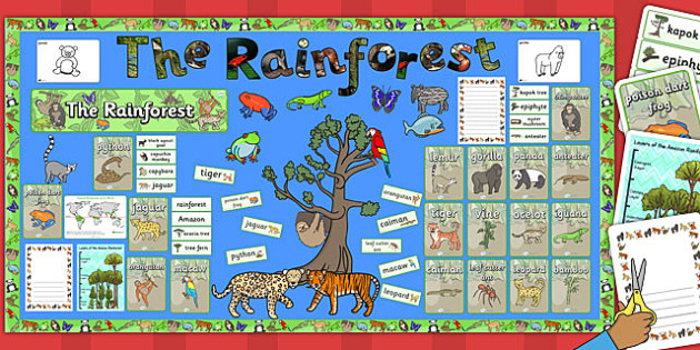Ready Made Rainforest Display Pack Ready Made Rainforest Pack