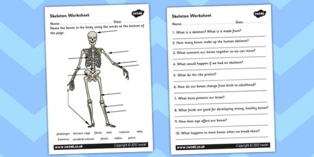Skeleton Worksheet Scientific Names - bones, human, body, bodies