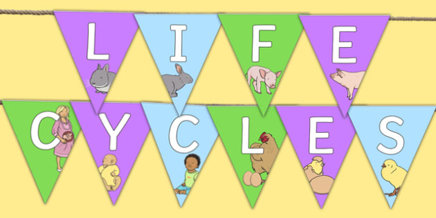 Life Cycles Themed Bunting - life cycles, bunting, display bunting, display