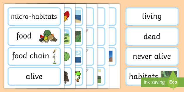 Year 2 Living Things their Habitats Scientific Vocabulary Cards