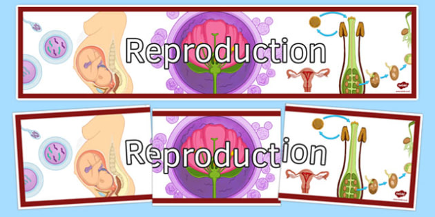 Reproduction Display Banner - reproduction, display banner, display, banner