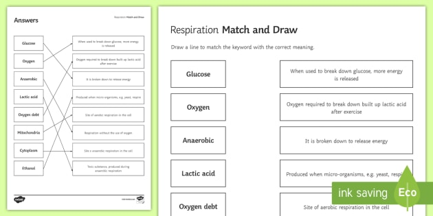 Respiration Match And Draw Teacher Made