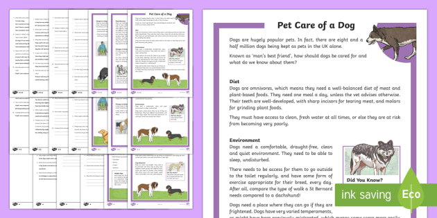 KS2 Pet Care Of A Dog Differentiated Reading Prehension