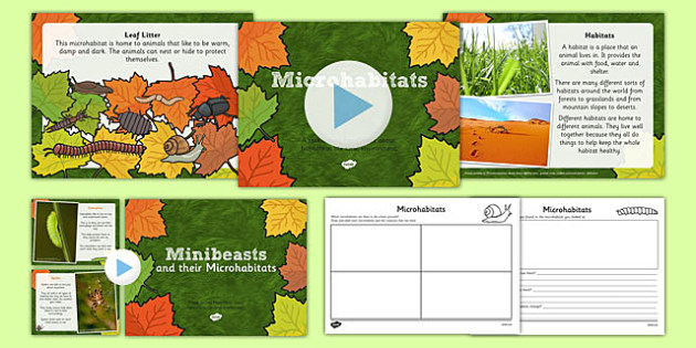 Living Things and their Habitats Microhabitats Lesson Teaching